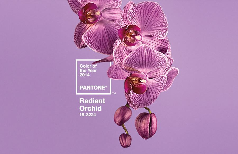 Radiant-Orchid-18-3224 - A cor de 2014
