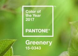 Alerta de Tendência: Cor Greenery 15-0343 é eleita a cor do ano de 2017.